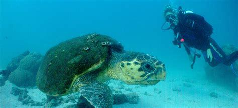 ningaloo reef dive sail ningaloo ningaloo reef snorkeling eco tours ningaloo