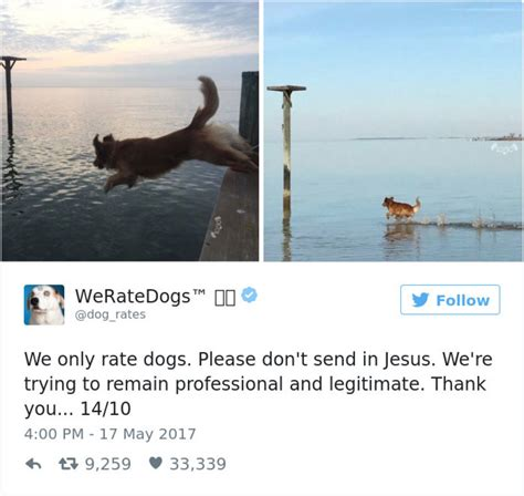 dogs rate 20 hilarious responses from we rate dogs after failed to send photos
