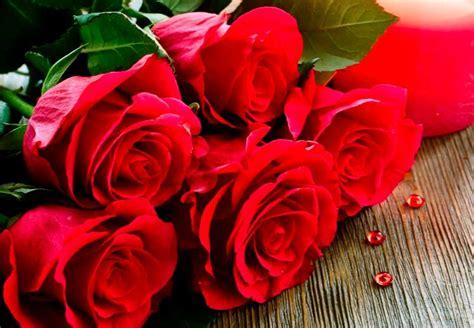 imagenes de flores juntas imagenes de rosas rojas para regalar y compartir