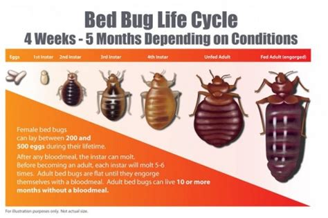 how long can bed bugs live on clothes bed bugs don t bring them home