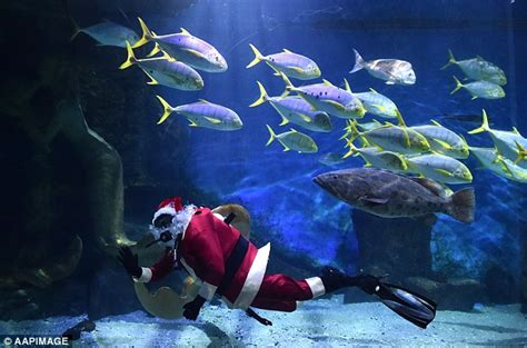 newest kid fish for christmas shark scuba santa swims with sharks at sea at melbourne aquarium daily mail