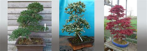 Bonsai Boom Onderhouden by Amazing Bonsai Bomen With Bonsai Boom Verzorgen Binnen