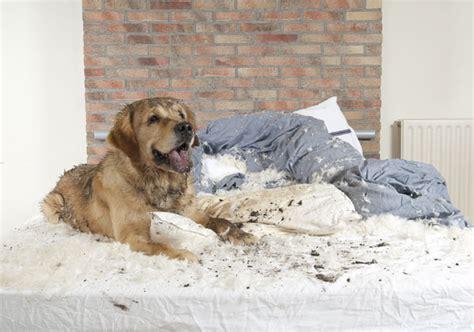 hund darf nicht ins bett darf der hund mit ins bett hunde