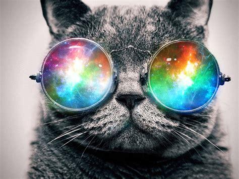 wallpaper cat with sunglasses trippy cat wallpapers wallpapersafari