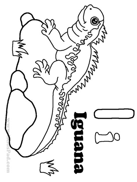 coloring page for iguana iguana coloring page coloring home