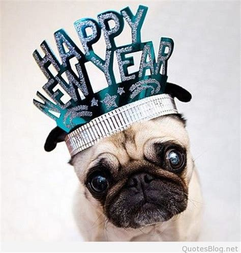new year animal animals happy new year wallpapers images 2016