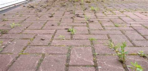 Killer For Patios by How To Kill Weeds Permanently Get Rid Of Weeds Forever
