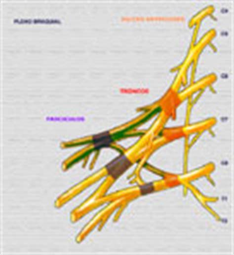 imagenes medicas rafela protocolos rmcuerpo share the knownledge
