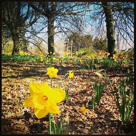 Botanical Gardens Orange In Orange Botanic Gardens Picture Of Orange Botanical Gardens Orange Tripadvisor