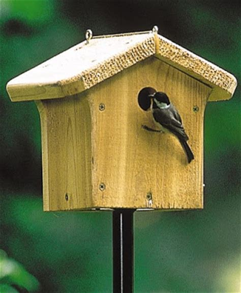 wild birds unlimited the benefits of putting up