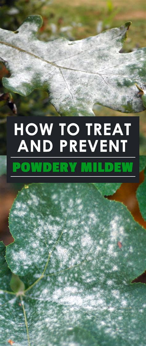 How To Prevent Mold top 28 how to prevent mildew how to prevent mold in
