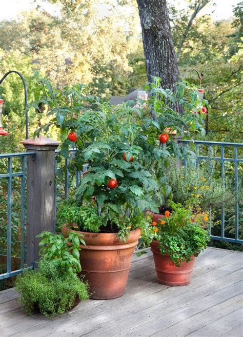 tomatoes container gardening 51 best images about container tomatoes on
