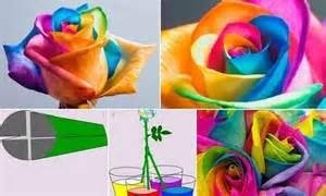 make your own colored flowers centennial homes