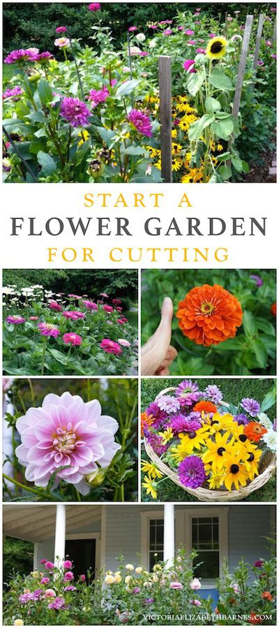 flowers for cutting garden best flowers for all summer color lots of blooms great