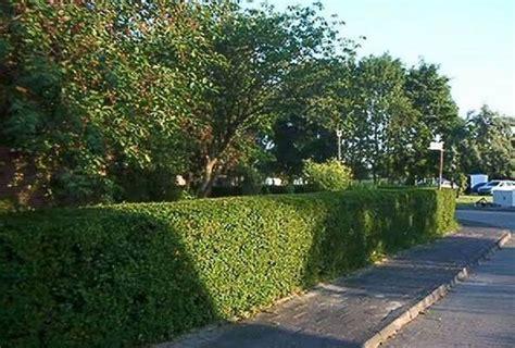 heckenschnitt bis wann obstbaumschnitt vom gartendesign in schonungen