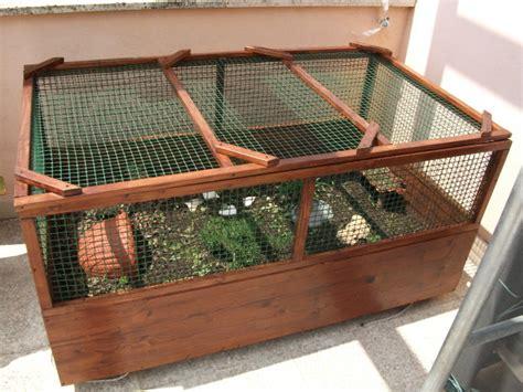 gabbia per tartarughe di terra il mio terrario