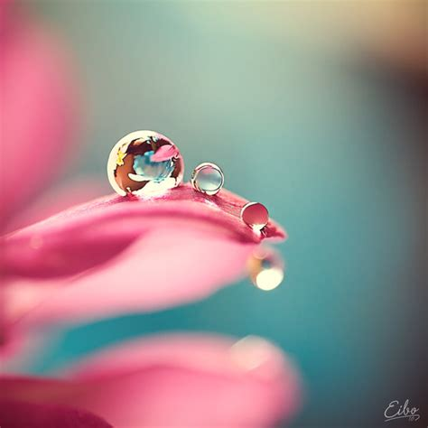 Stunning Water Photography by Macro Photography Water Drops18 Creativeoverflow