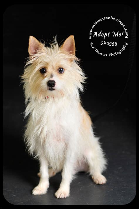 shaggy rescue shaggy s web page