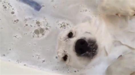 webschnorcheln hund genie 223 t sein bad wirklich sehr