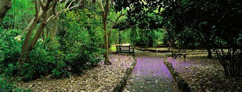 el jardin canario flora y fauna de gran canaria canarias