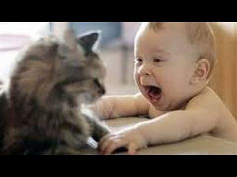 amazing movies  funny animals youtube