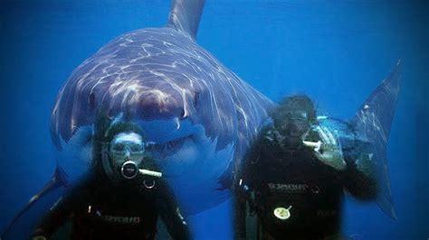 megalodon recent sightings megalodon shark caught on tape 2016 alien sightings
