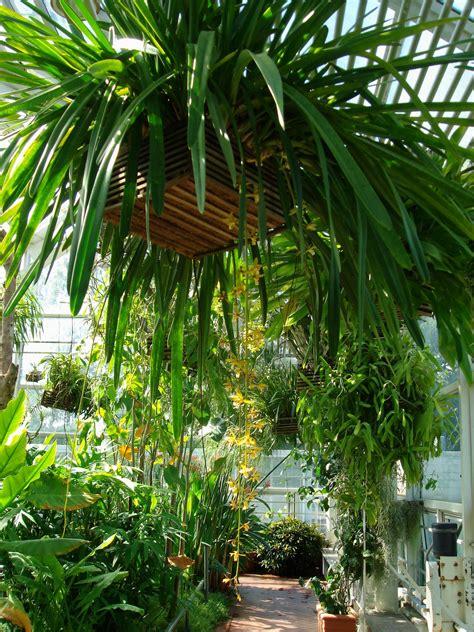 Tsukuba Botanical Garden Cymbidium Finlaysonianum Wallich Ex Lindley