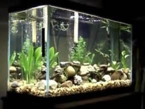 My 30 Gallon Fish Tank Update   YouTube