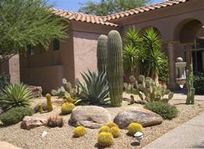 Patio Pool Tucson Decorating Yard With A Variety Of Desert Plants