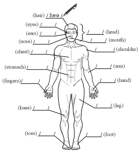 black out sections of pdf fun test name the parts of the body in your language