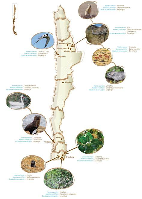 cadena trofica norte de chile 11 pir 225 mides y cadenas troficas explorando el pais