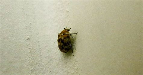 what chemical kills bed bugs chemicals to kill bed bugs 28 images how to get rid of