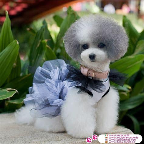 imagenes a blanco y negro de perros vestido blanco y negro con tul para perro ideal para