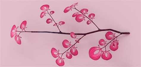 Blender Cosmos Pink weekly 28 february 27 2015 187 cosmos laundromat the gooseberry open project