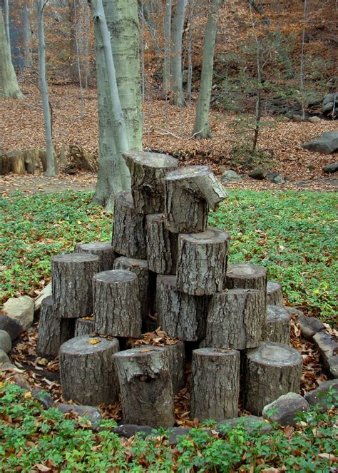 wood stump tree stump poetry