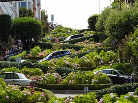 best place in lombard for up dox lombard street crookedest street san francisco ca