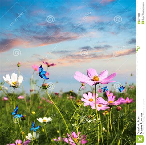 imagenes de mariposas que vuelan mariposas que vuelan en las flores