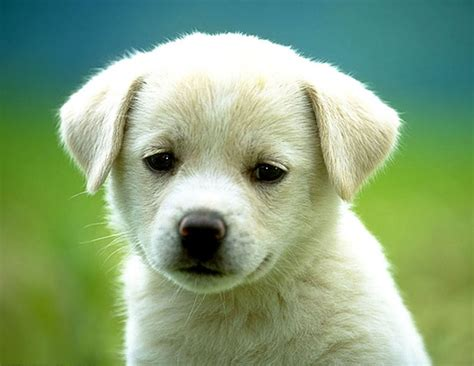 small house dogs good with kids small dogs good with kids dog pet photos gallery 0nb8jog2pp