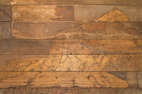 How to Detect Termite Damage on Your Floor   Tony's Flooring