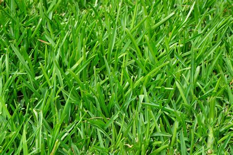 Green Grass green grass field 183 free stock photo