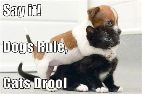 dogs rule dogs rule cats drule thinglink