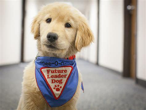 golden retriever guide dogs nasa nasa langley welcomes a new leader