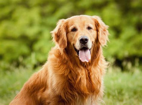 great family dogs the 7 best dogs to as a family companion miss molly says