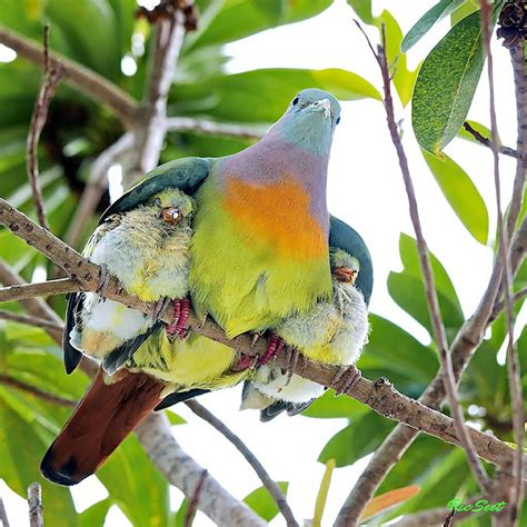 20 birds taking care of their babies bored panda