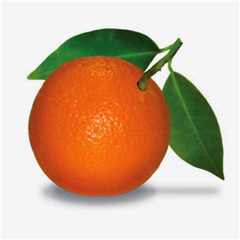 Jeruk Medan Manis 1 fakta tentang buah jeruk aku buah sehat