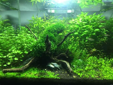 aquascape betta 12 best jungle aquascapes images on pinterest fish