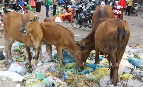 maharashtra government defends plastic ban by citing