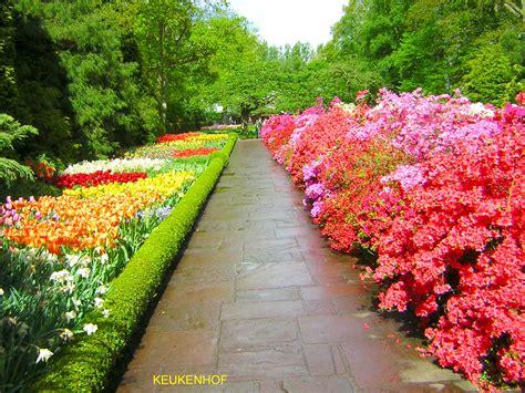 fiori da giardino primaverili keukenhof uno dei giardini primaverili pi 249 estesi al
