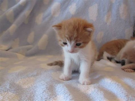 4 2 kittens all now found forever homes