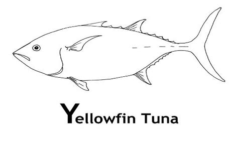 yellowfin tuna coloring pages and facts